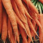 Banner Ithaka Organic Carrot