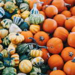 Banner Ithaka Organic Pumpkin