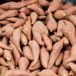 Ithaka Organic sweet potato